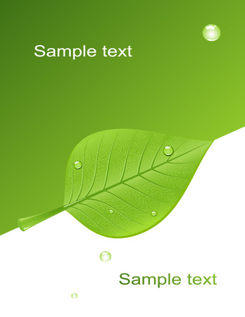 Background with green leaf, vector illustration, file included Vector