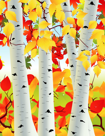 autumnally: Birch grove, vector illustration, file included Illustration