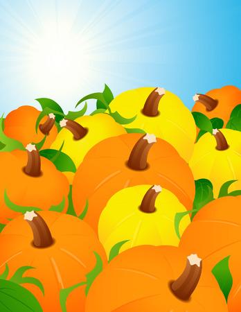 Pumpkin harvest, vector illustration, file included Vector