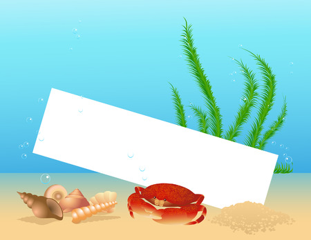 Sea shell frame, vector illustartion, file included Vector