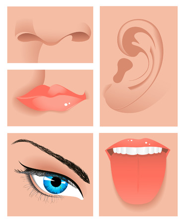 Human sense set, vector illustration, file included Vector