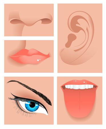 sense of: Human sense set, vector illustration, file included
