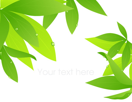 Tropical leaf branch Vector