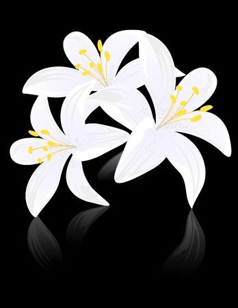 water lilies: Lily flores en negro backgound, ilustraci�n vectorial, archivo EPS incluido