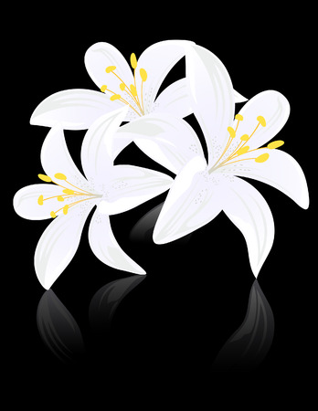 Lily flowers on black backgound, vector illustration, EPS file included Vector