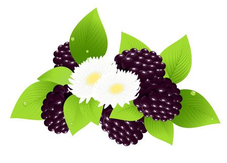 moras: Moras y flor, ilustraci�n,  Vectores
