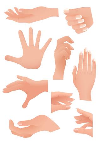 Human palm set Vector
