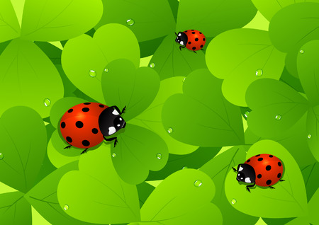 Ladybird on leaf Stock Vector - 6741907