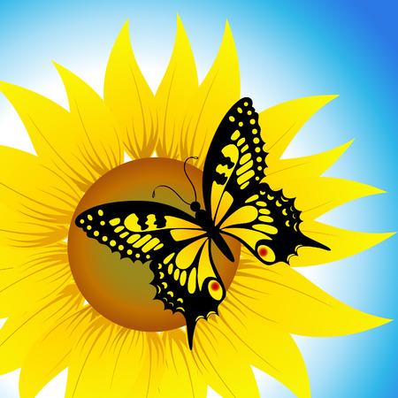 graine tournesol: Papillon assis sur le tournesol