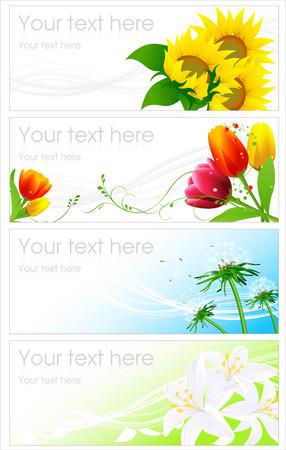 graine tournesol: Arri�re-plans de fleur