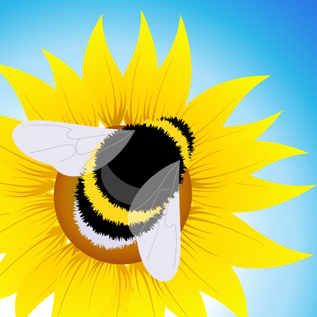 Bumblebee sitting on sunflower Vector