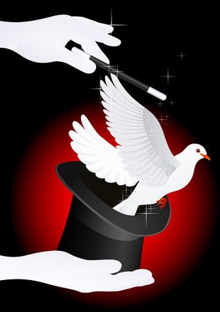 top black hat: Magic dove,  illustration  Illustration