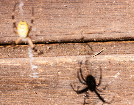 spider's shadow reflecting on the wood