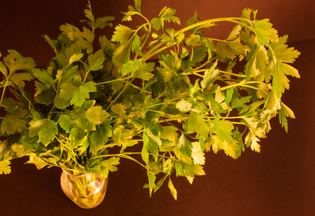 a bandle of parsley in a carafe of water Banque d'images - 122883461