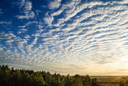 cirrus clouds over the forest at sunset  photo
