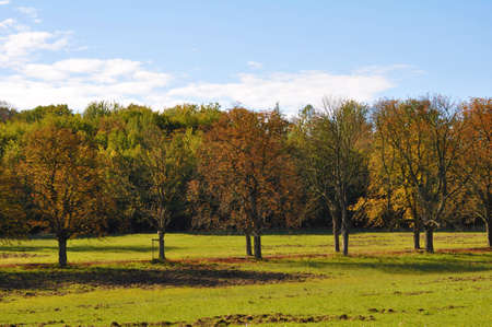 Meadow in autumn photo