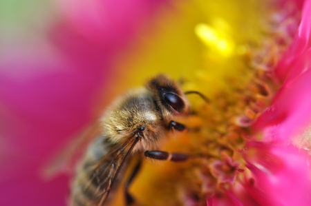 Bumble Bee on a flower photo