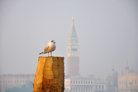 Seagull in Venice, Italy photo