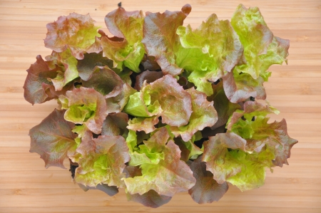 Salad with Earth Stock Photo - 19139791