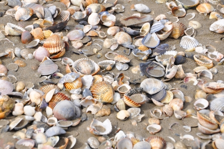 Different shells on a sand beach background