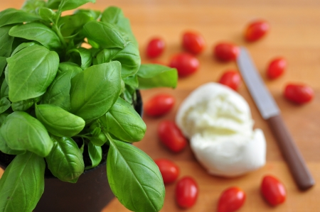 ingredients for caprese salad photo