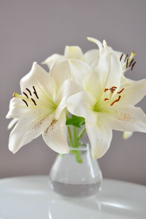 White Lily Flowers photo