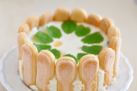Lemon Cheesecake with Ladyfingers Standard-Bild
