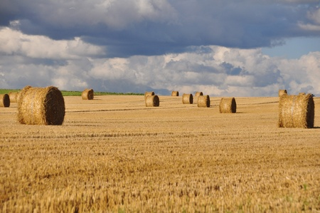 Rural landscape with golden straw bales  photo