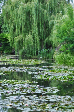 View of the Garden of Claude Monet in Giverny, France photo