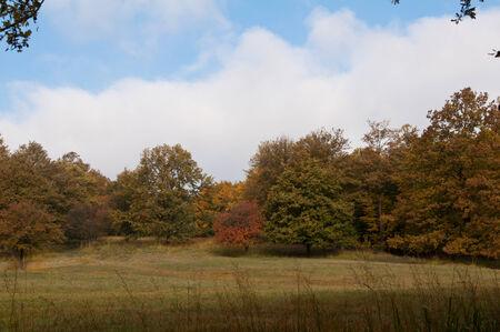 Autumn Landscape in Austria, Europe photo