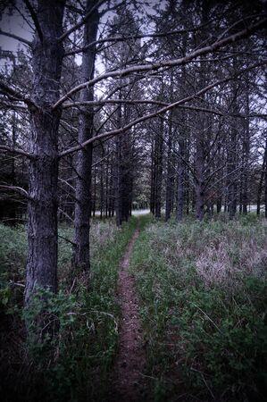 Pad in een bos