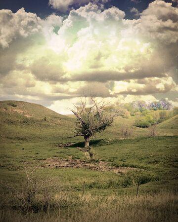 Loan tree tucked between hills.