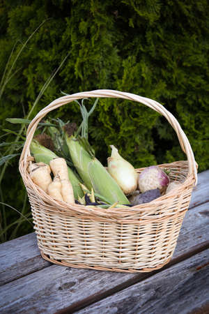 Basket full of fall produce including parsnips, corn, onions,  multi color beans, turnips, and beets sitting on a rustic outdoor table. 版權商用圖片