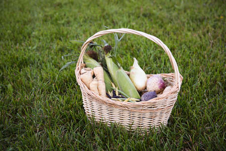 Basket full of fall produce including parsnips, corn, onions,  multi color beans, turnips, and beets. 版權商用圖片