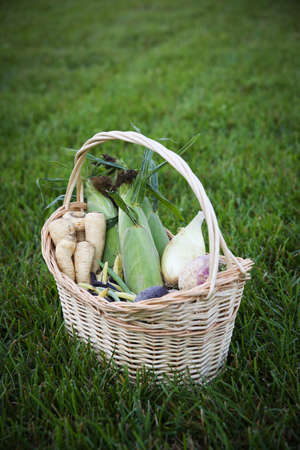 Basket of fall vegetable harvest including parsnips, beans, corn, onion, turnips, and beets.