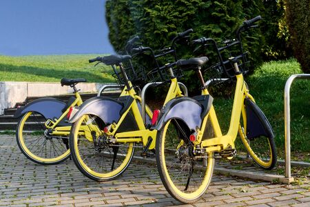 Several yellow bicycles stand in a row on a sunny day Standard-Bild