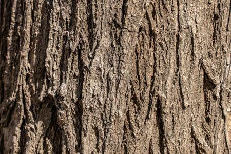 Tree bark texture. Trunk wallpaper.