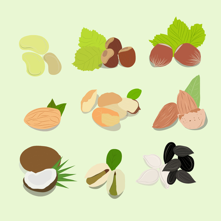 filberts: Nuts vector collection