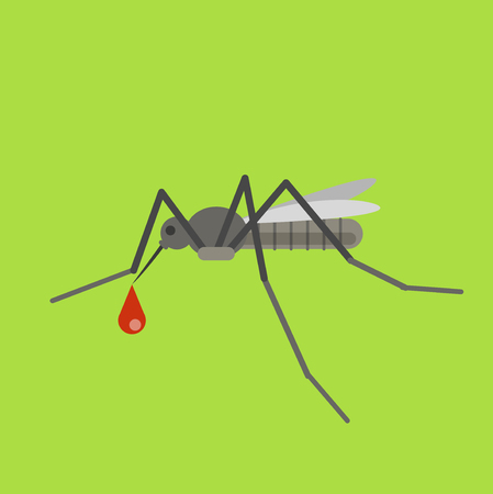 gnat: Mosquito vector illustration. Gnat with blood. Mosquito sucks the blood. Mosquito vector infections
