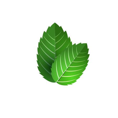 新鮮なミントの葉。ミント ベクトル オブジェクトの束。緑のミントの葉が分離されました。ミントのカクテル。料理のミント。  イラスト・ベクター素材