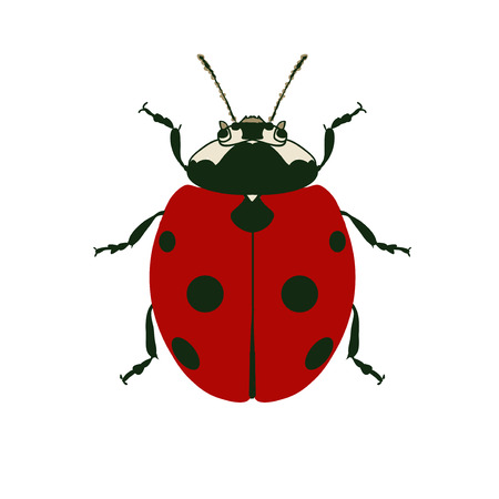 ladybird: Ladybug vector illustration. Red ladybird. Ladybug in the garden. Ladybird on white background. Small insect icon. Flora and fauna. Red insect on white background