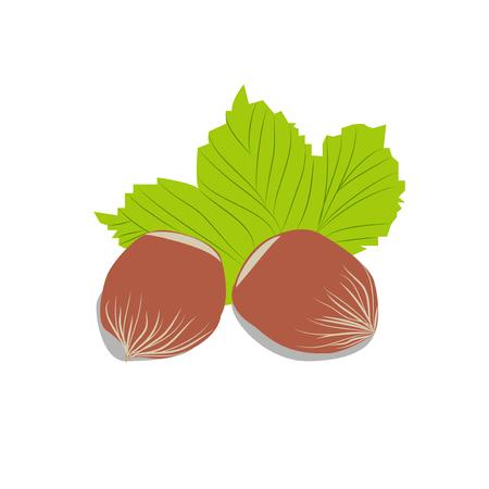 Hazelnut vector illustration. Hazel set icon. Hazelnut on white background. Product in grocery store. Healthy vegetarian food