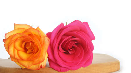 orange rose: Red rose and orange rose on wooden table on white background