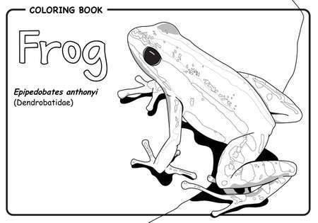Red frog Epipedobates anthonyi (Dendrobatidae) on white background - Coloring book