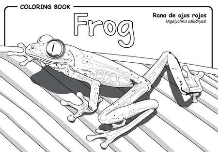 Frog (Agalychnis callidryas) on white background - Coloring book Ilustração
