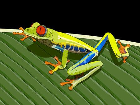 Frog (Agalychnis callidryas) on black background - Vector image Illustration