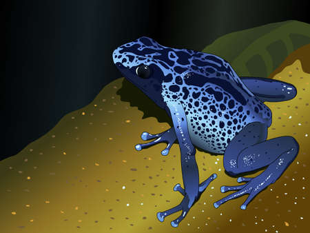 dendrobates: Blue poison dart frog - Dendrobates-pumilio on dark blue background - Vector image