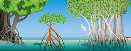 Drawing of three different types of mangrove with underwater roots of a river with fish, crabs and a white heron in the scene with blue sky in the background. Vector image