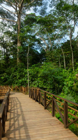 Elevated path built with wood through a forest in the Amazon region with green vegetation background