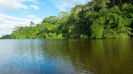 Trees on the edge of a river in the Ecuadorian Amazon near the city of Nueva Loja on a sunny day Stock Photo